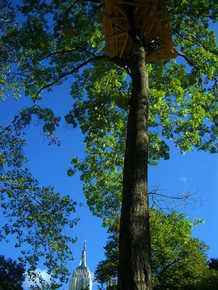 Treehouses_028