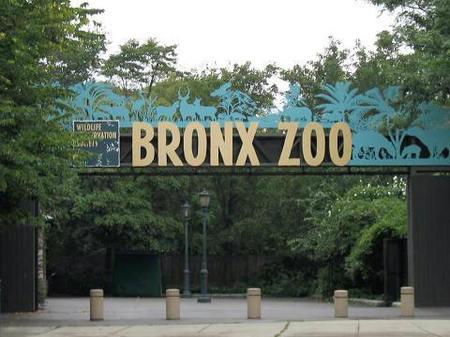 Stavenn_bronx_zoo_00